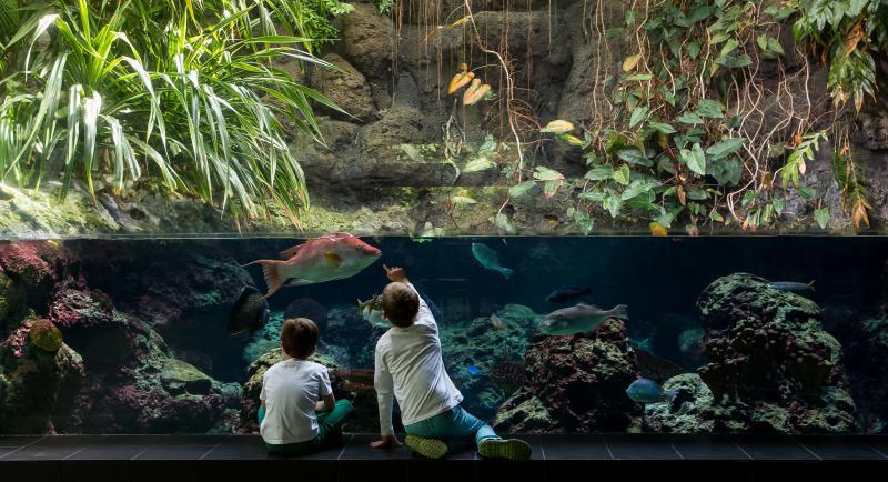 zoo aquarium berlin indoor aktivit ten f r kinder top10berlin. Black Bedroom Furniture Sets. Home Design Ideas