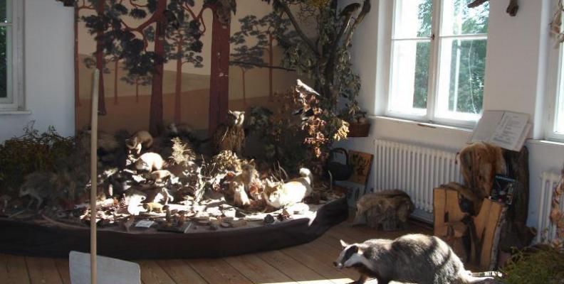 Foto: Waldmuseum | Gudrun Rademacher