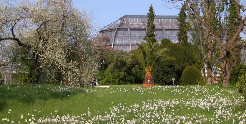 Foto: I. Haas | Botanischer Garten und Botanisches Museum Berlin-Dahlem