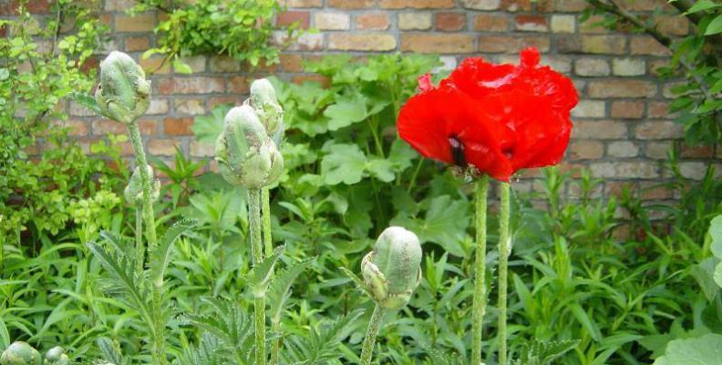 Foto: Comenius Garten