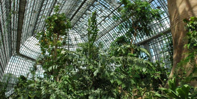 Large Greenhouse, Inside View