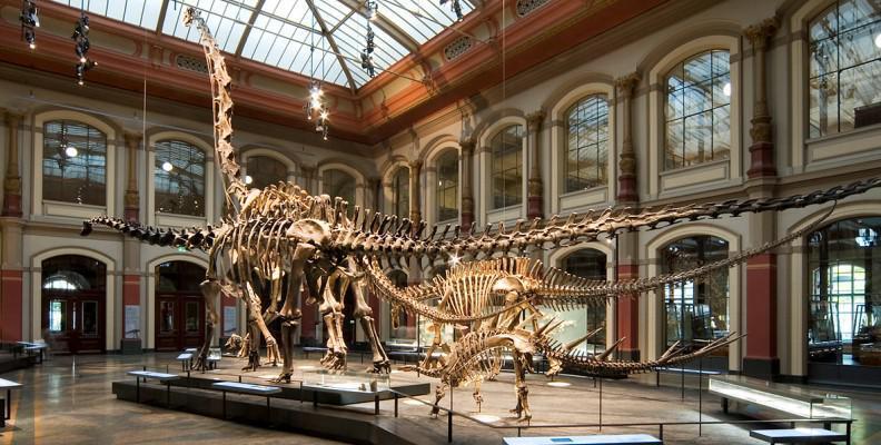 Foto: Museum für Naturkunde Berlin