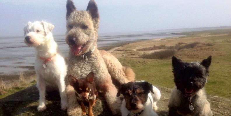 Kynos - Rund um den Hund