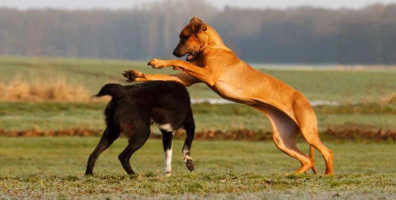 Foto: Dogs Institut