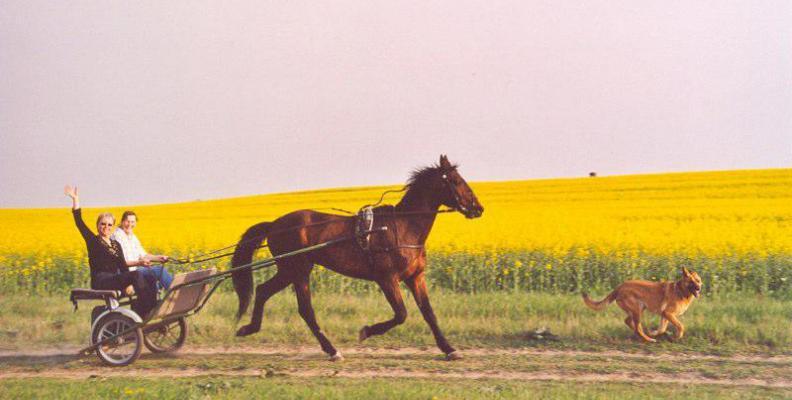 Foto: Lucky Horse Ranch Mönchsheim