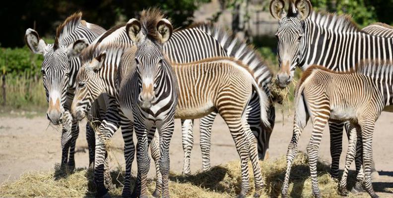 Foto: Tierpark Berlin