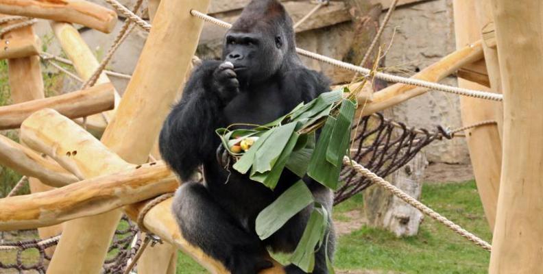 Foto: Zoo Berlin