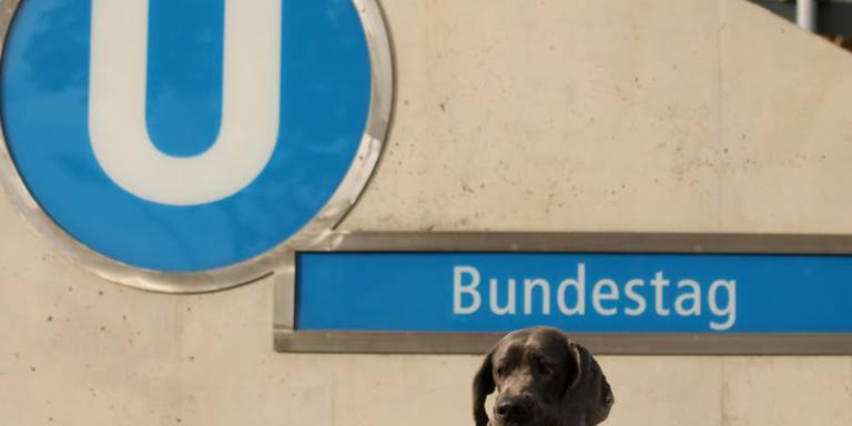 Foto: berlin mit hund | Fellnasen-Express.de