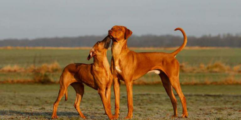 Foto: Dogs Institut