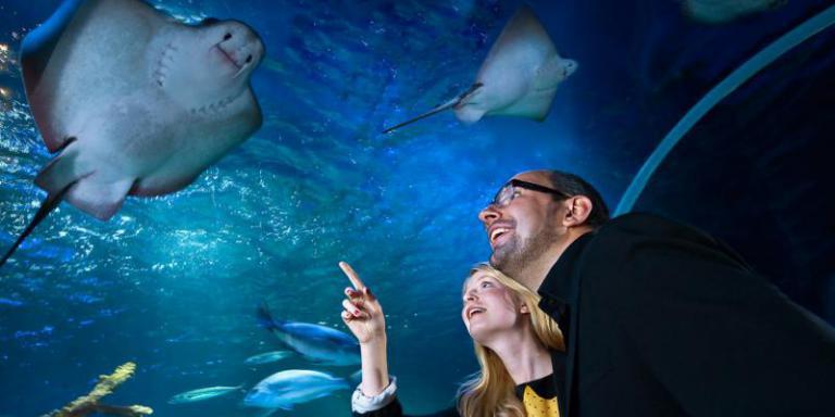 Foto: AquaDom & SEA LIFE