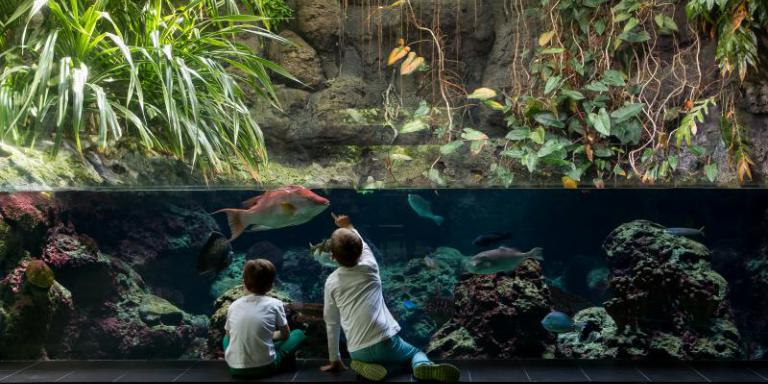 Foto: Aquarium Berlin